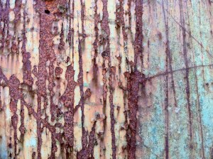 a 'forest' of rust