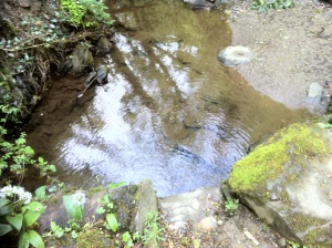 but not before I have stopped to enjoy the reflections in the stream