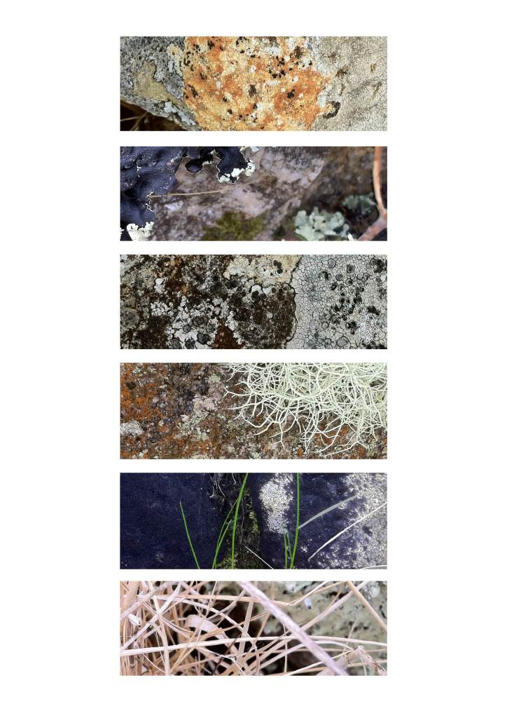 Track 3 (granite, moss, lichen and blond grasses)