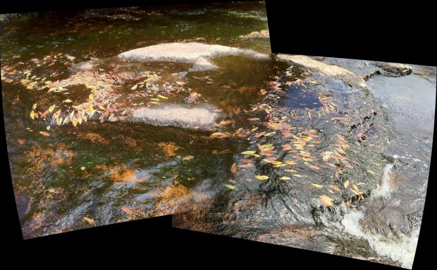 Dartmoor leaves (River Avon, Dartmoor)